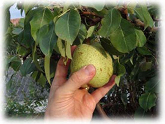 L'arbre et ses fruits : l'être et le faire - Samedi de la 23e semaine du Temps ordinaire.