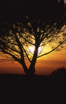 Homélie  pour les fidèles défunts : «  La vie ne passe pas, elle est transformée »