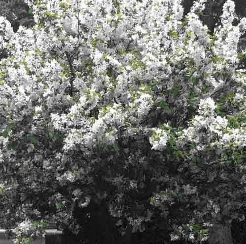 Chaque personne est un jardin (Photo H. Giguère)