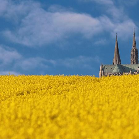 Le blé pousse tout seul (Crédits photo : libre de droit Association Oraweb)