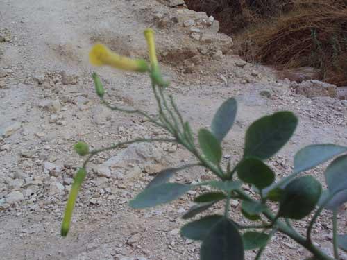 Petite fleur dans le désert de Juda en Terre Sainte (Crédits photo : H. Giguère)