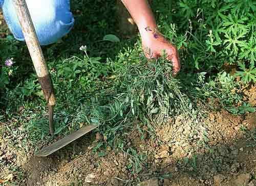 """Publicité pour le jardinage """"Les mauvaises herbes doivent être tenues éloignées de votre pelouse. Si vous ne retirez pas les mauvaises herbes, elles vont envahir votre pelouse jusqu'à la transformer en jardin de mauvaises herbes. """""""